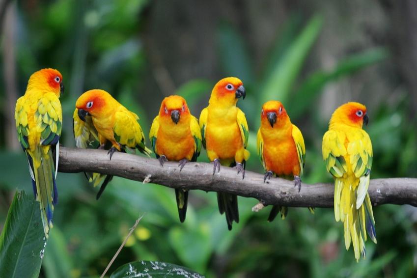 comment reconna tre un oiseau malade le carrefour des animaux. Black Bedroom Furniture Sets. Home Design Ideas