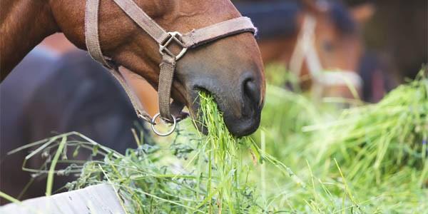 nourriture-pour-cheval